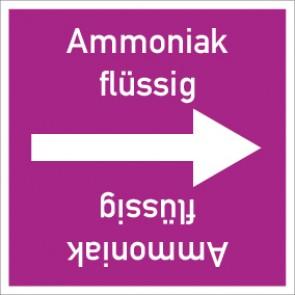 Rohrleitungskennzeichnung viereckig Ammoniak flüssig · Aufkleber